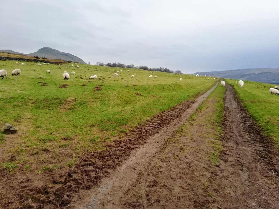 Field taking you from Killearn to Dumgoyne